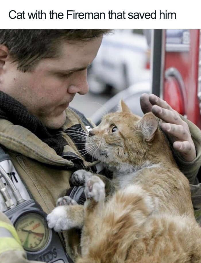 Felidae - Cat with the Fireman that saved him YT DS
