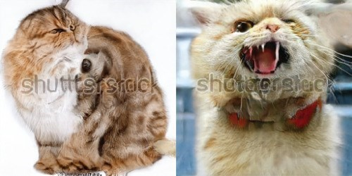 Cat - shutitsrshdek shotetorsleca
