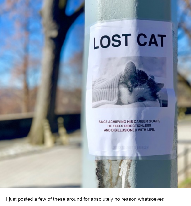 Text - LOST CAT SINCE ACHIEVING HIS CAREER GOALS HE FEELS DIRECTIONLESS AND DISILLUSIONED WITH LIFE USTINEA ANTTON SL COM I just posted a few of these around for absolutely no reason whatsoever.