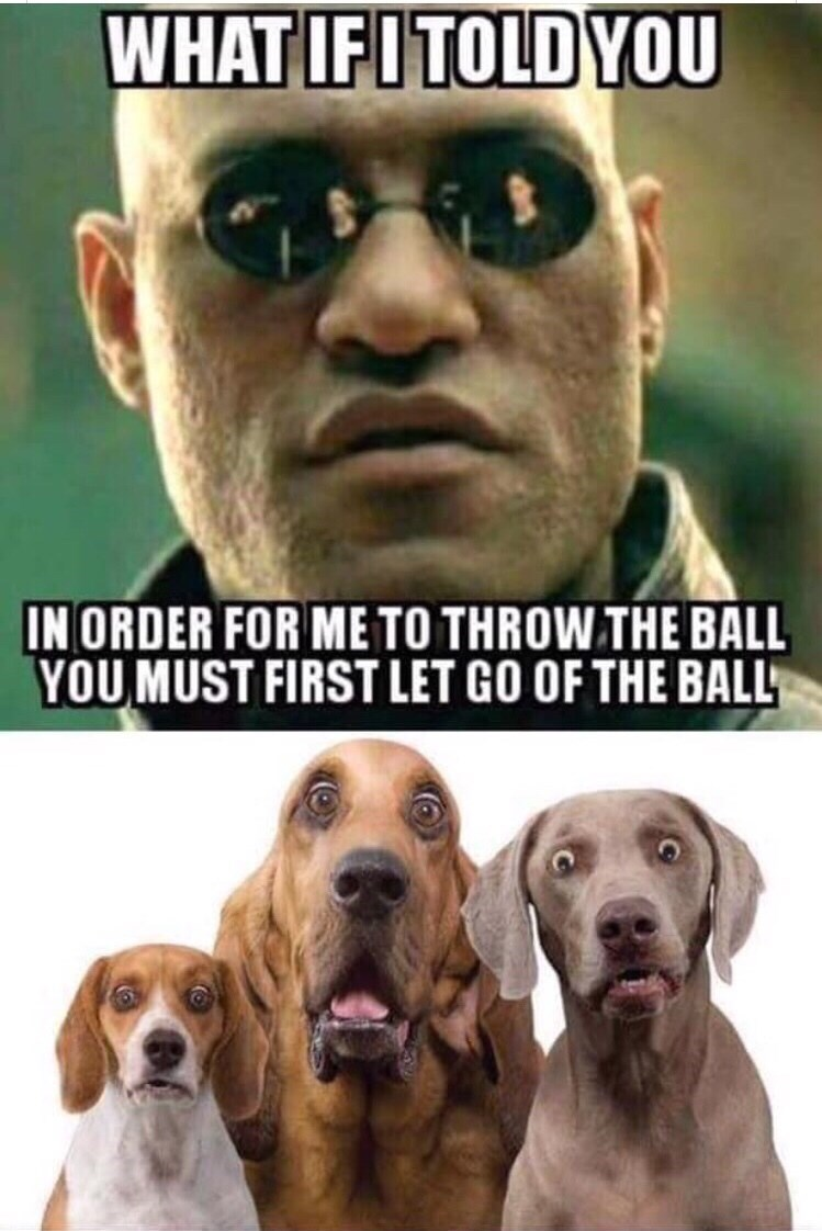 Dog - WHAT IFITOLD YOU IN ORDER FOR METO THROW THE BALL YOU MUST FIRST LET GO OF THE BALL