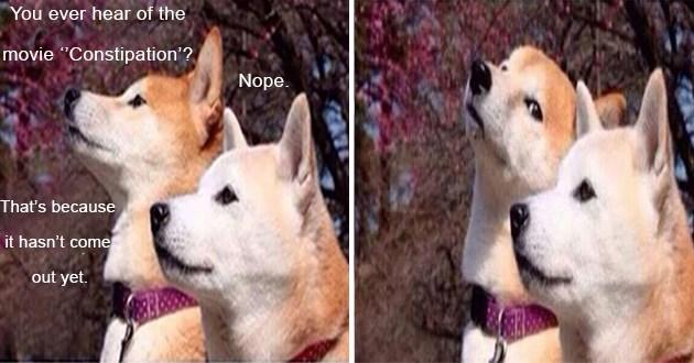 dogs doggo funny memes