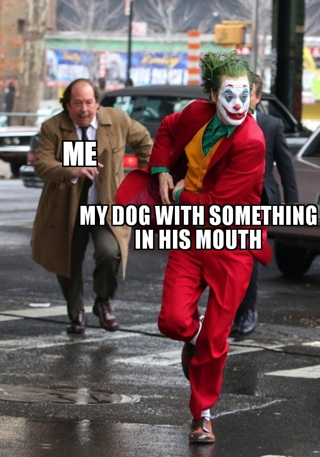 Fictional character - ME MYDOG WITH SOMETHING IN HIS MOUTH