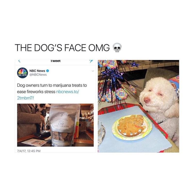 Text - THE DOG'S FACE OMG Tweet NBC News NBC NEWS @NBCNews Dog owners turn to marijuana treats to ease fireworks stress nbcnews.to/ 2tmbmTf CBD DGTREATS 7/4/17, 12:45 PM