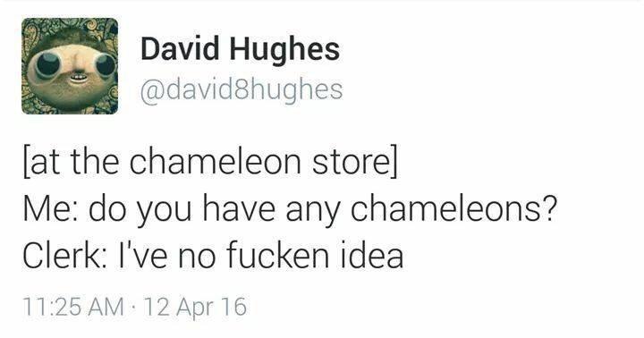 Text - David Hughes @david8hughes at the chameleon store] Me: do you have any chameleons? Clerk: I've no fucken idea 11:25 AM 12 Apr 16