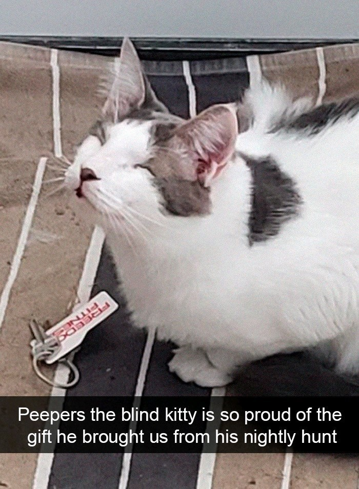 Cat - Peepers the blind kitty is so proud of the gift he brought PITN FREEC from his nightly hunt