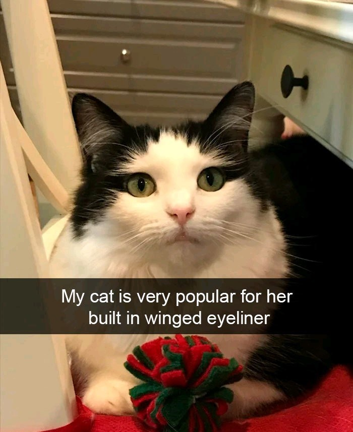 Cat - My cat is very popular for her built in winged eyeliner