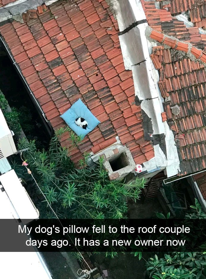 Roof - My dog's pillow fell to the roof couple days ago. It has a new owner now
