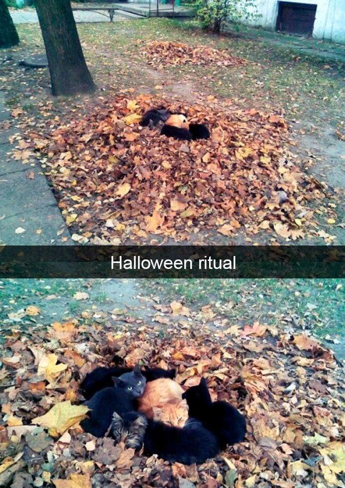 Leaf - Halloween ritual