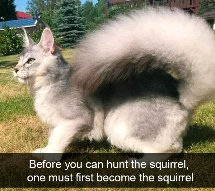 Cat - Before you can hunt the squirrel, one must first become the squirrel