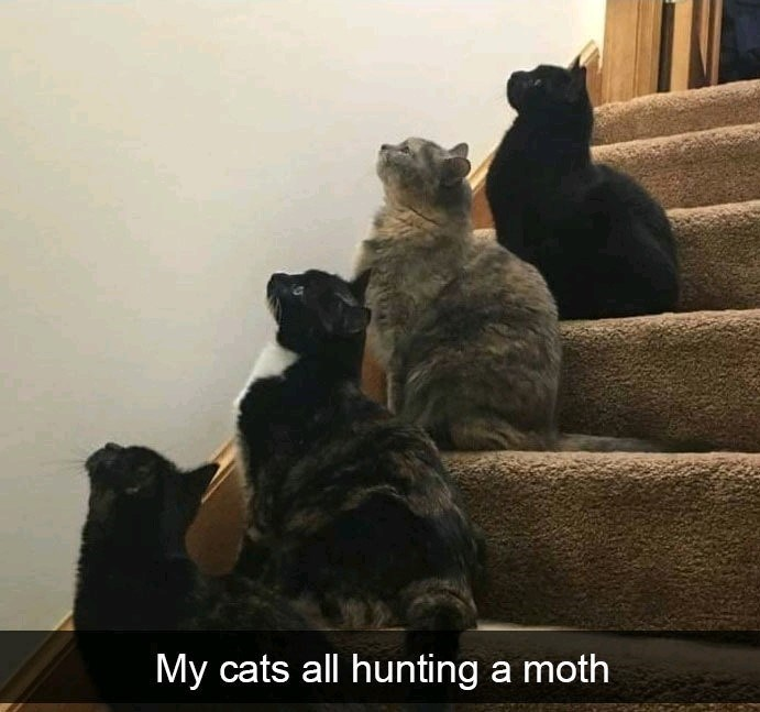 Cat - My cats all hunting a moth