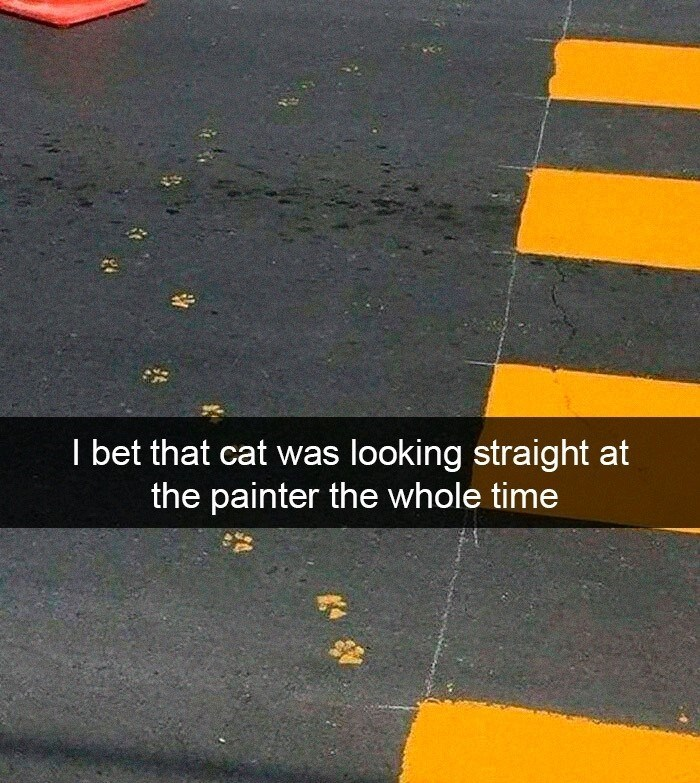 Yellow - I bet that cat was the painter the whole time looking straight at