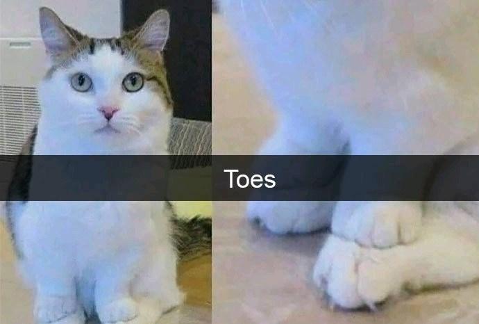 Cat - Toes