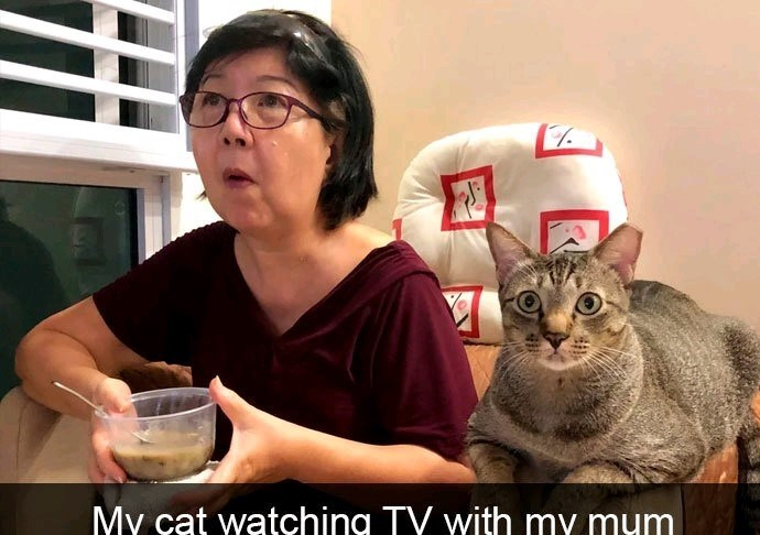 Cat - MY cat watching TY with my mum