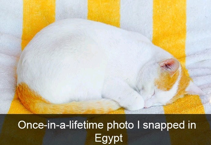Yellow - Once-in-a-lifetime photo I snapped in Egypt