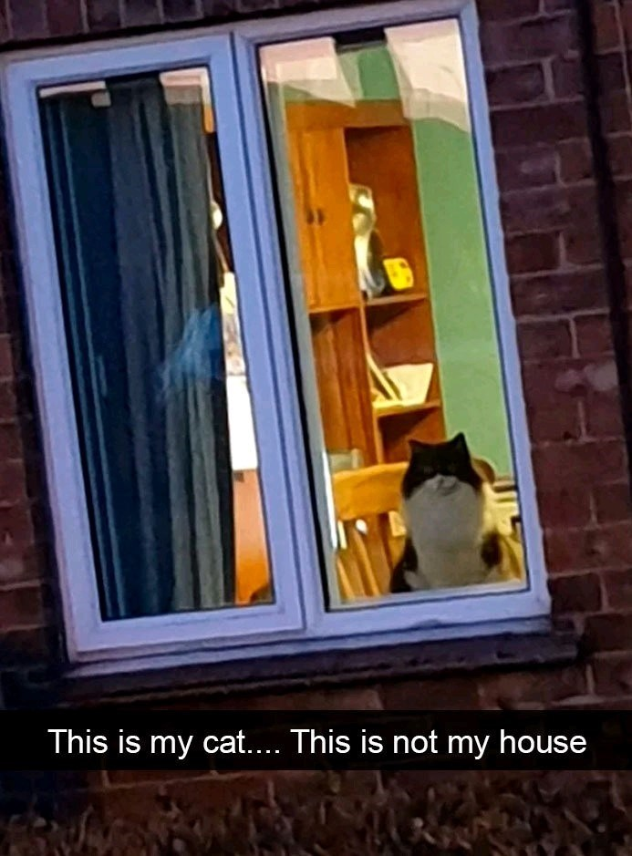 Window - This is my cat.... This is not my house