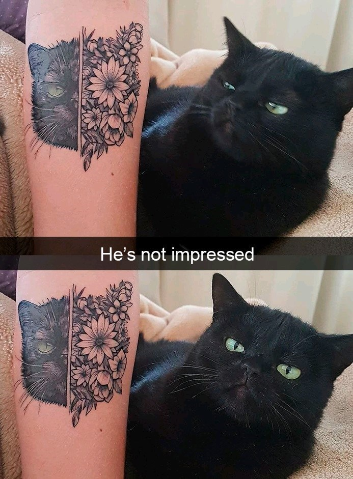 Black cat - He's not impressed