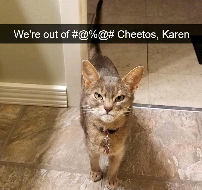 Cat - We're out of #@%@# Cheetos, Karen