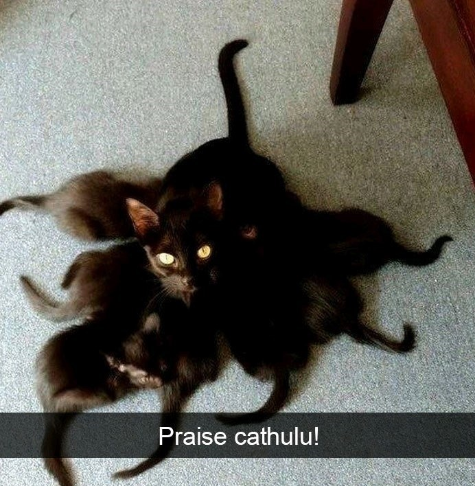 Cat - Praise cathulu!