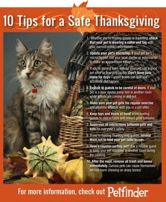 Cat - 10 Tips for a Safe Thanksgiving 1. Whether you're hosting guests or travelling, check that your pet is wearing a collar and tag with Your current contact information 2. Update your pet's microchip. If your pet isn't microchipped, call your local shelter or veterinarian to make an appointment today! 3. If you re leaving town without your pet, use a good pet sitter or boarding facility. Don't leave pets alone for days-water bowls can spill and accidents can happen. Explain to guests to be ca