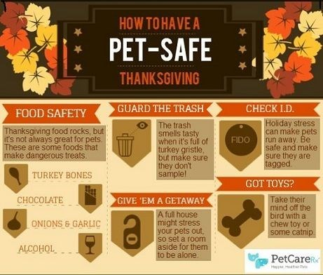 Font - HOW TOHAVE A PET-SAFE THANKSGIVING GUARD THE TRASH CHECK I.D. FOOD SAFETY Holiday stress can make pets run away. Be safe and make sure they are tagged The trash smells tasty when it's full of turkey gristle, but make sure they don't sample! Thanksgiving food rocks, but it's not always great for pets These are some foods that make dangerous treats. FIDO TURKEY BONES GOT TOYS? GIVE EM A GETAWAY CHOCOLATE Take their mind off the bird with a chew toy or some catnip A full house might stress y