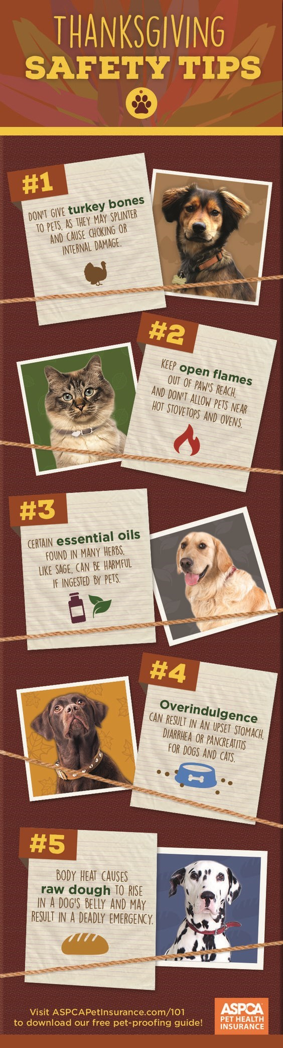 Cat - THANKSGIVING SAFETY TIPS #1 DON'T GIVE turkey bones TO PETS, AS THEY MAY SPLINTER AND CAUSE CHOKING OR INTERNAL DAMAGE #2 KEEP open flames OUT OF PAW'S REACH, AND DON'T ALLOW PETS NEAR HOT STOVETOPS AND OVENS # 3 CERTAIN essential oils FOUND IN MANY HERBS LIKE SAGE, CAN BE HARMFUL IF INGESTED BY PETS #4 Overindulgence CAN RESULT IN AN UPSET STOMACH. DIARRHEA OR PANCREATITIS FOR DOGS AND CATS #5 ΒΟDΥ HEA (AUSES raw dough TO RISE IN A DOG'S BELLY AND MAY RESULT IN A DEADLY EMERGENCY ASPCA Vi