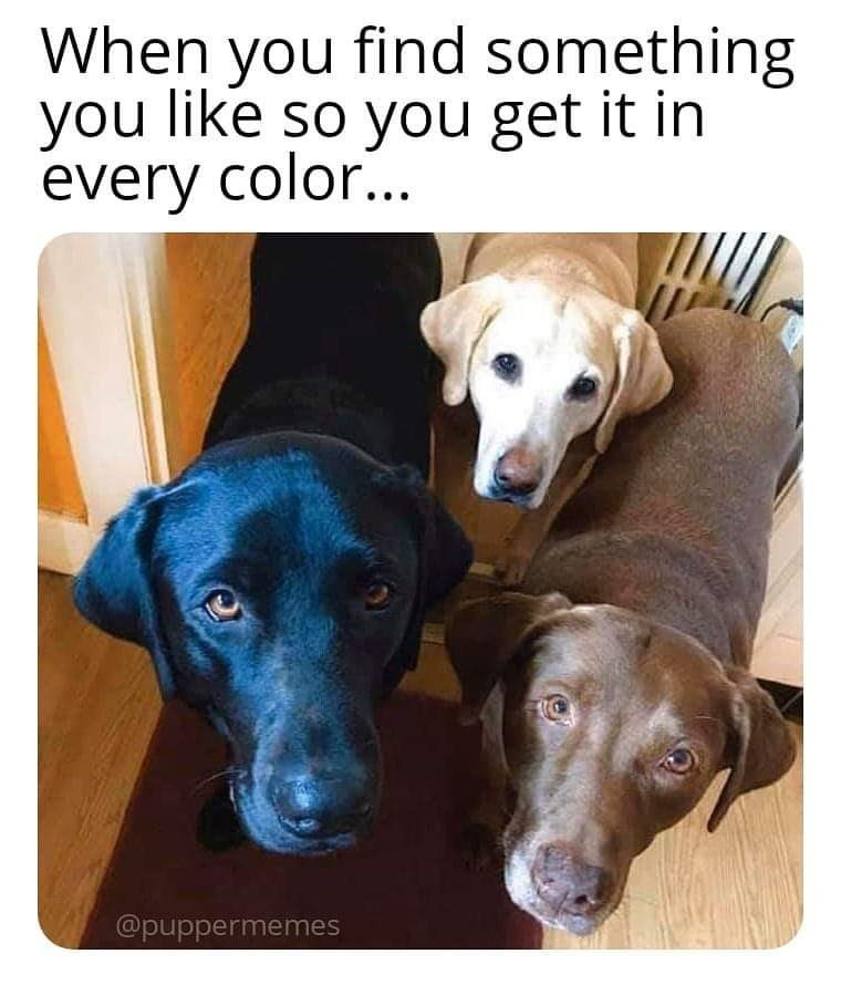Dog - When you find something you like so you get it in every color... @puppermemes