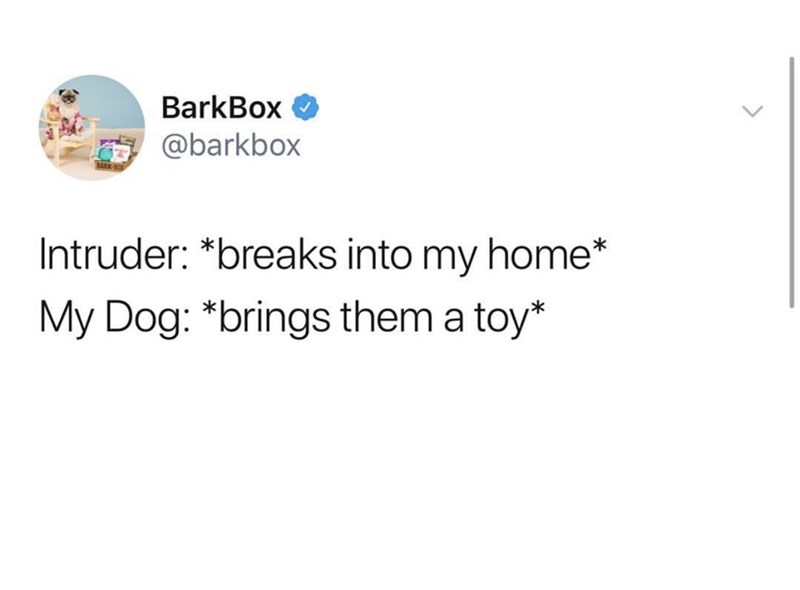 Text - BarkBox @barkbox Intruder: *breaks into my home* My Dog: *brings them a toy*