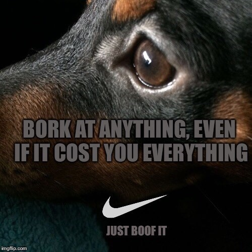Canidae - BORK AT ANYTHING, EVEN IFIT COST YOU EVERYTHING JUST BOOF IT imgflip.com