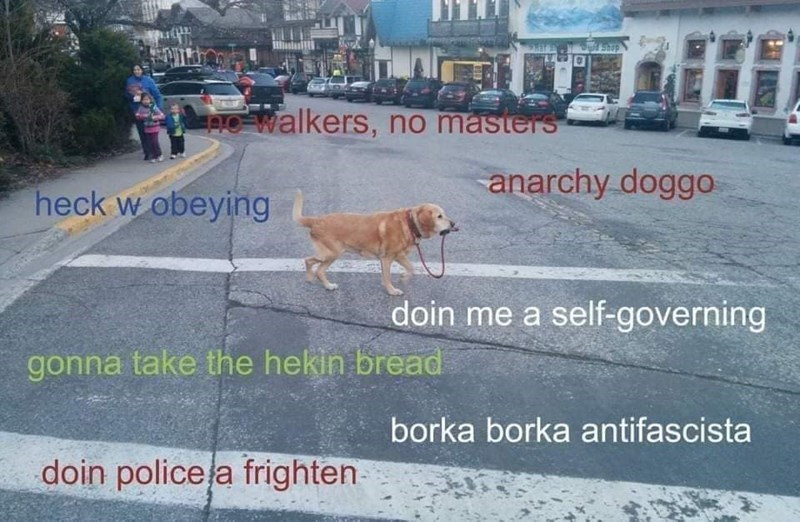 Dog - 10 walkers, no masters anarchy doggo heck w obeying doin me a self-governing gonna take the hekin bread borka borka antifascista doin police la frighten