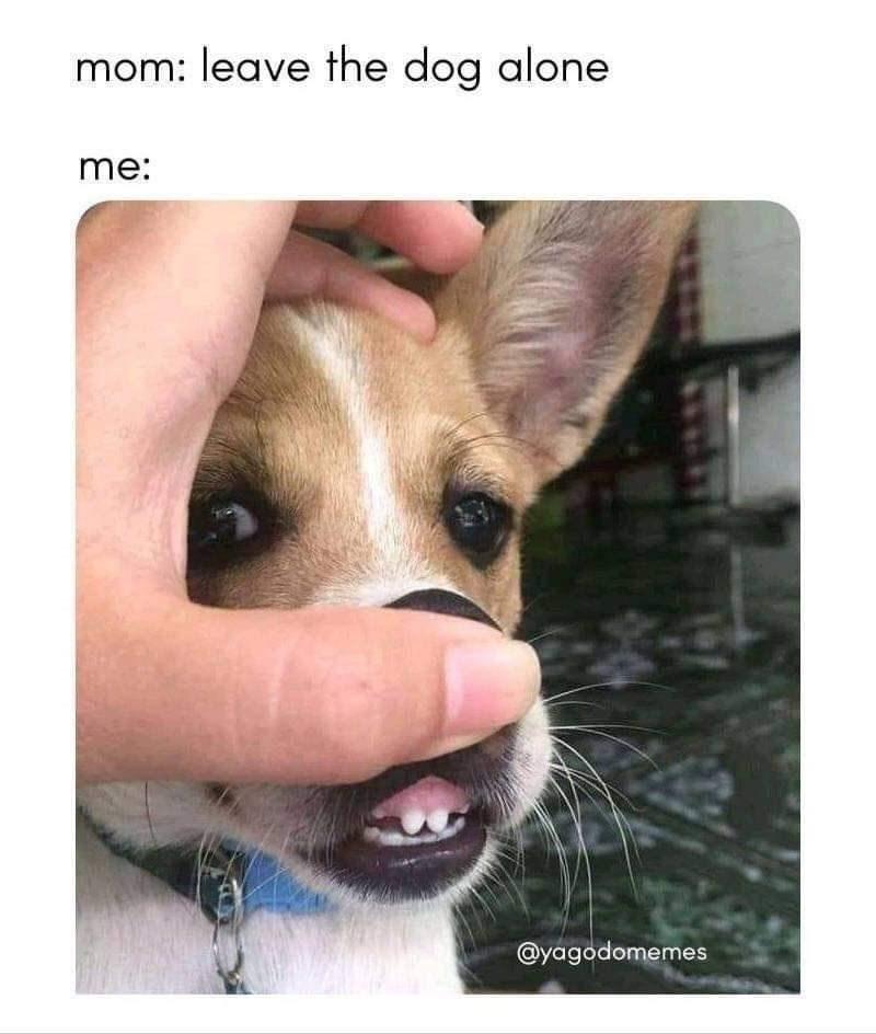 Dog - mom: leave the dog alone me: @yagodomemes