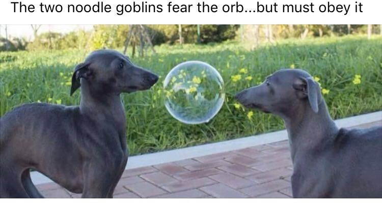 Dog - The two noodle goblins fear the orb...but must obey it