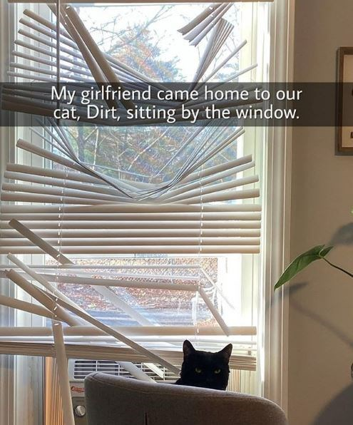 Window treatment - My girlfriend came home to our cat, Dirt, sitting by the window.
