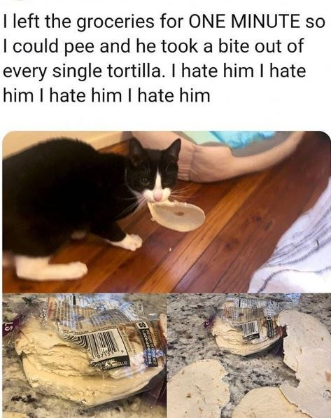 Cat - I left the groceries for ONE MINUTE so I could pee and he took a bite out of every single tortilla. I hate him I hate him I hate him I hate him