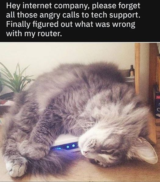 Cat - Hey internet company, please forget all those angry calls to tech support. Finally figured out what was wrong with my router.
