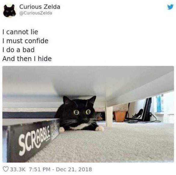 Cat - Curious Zelda @CuriousZelda I cannot lie I must confide I do a bad And then I hide SCRBS 33.3K 7:51 PM- Dec 21, 2018