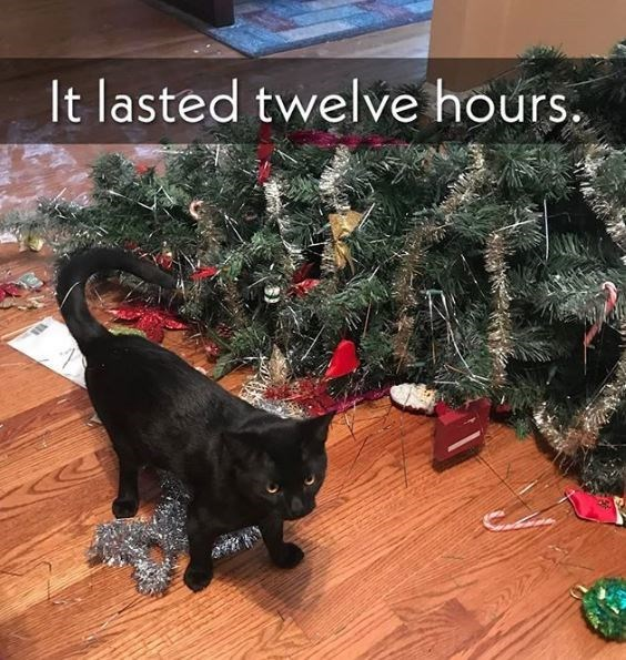 Cat - It lasted twelve hours.