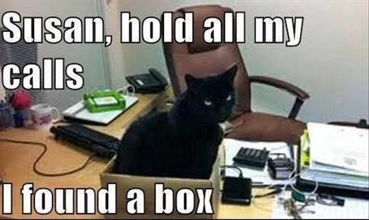 Cat - Susan, hold all my calls I found a box