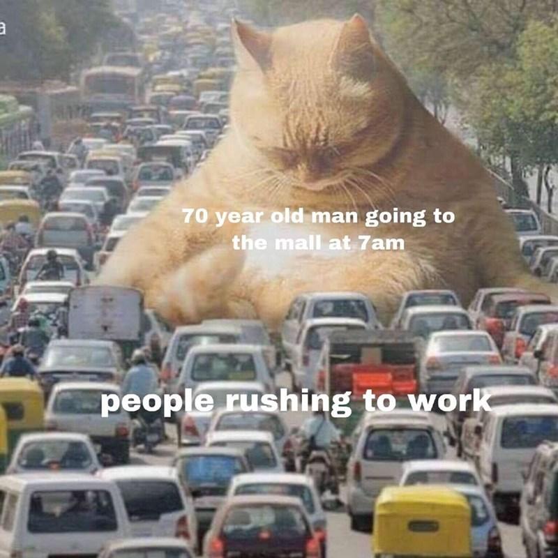 Memes Cats funny - 9395932416