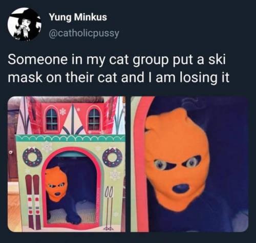 cat memes - 9395964416