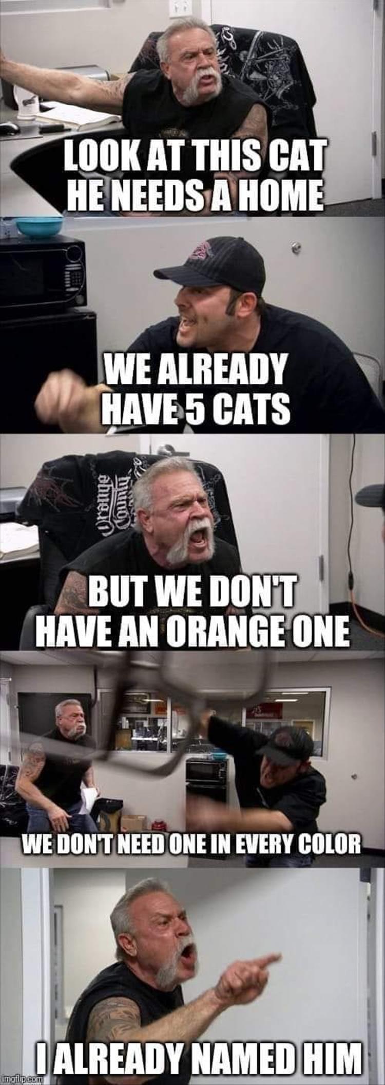 cat memes - 9395969280