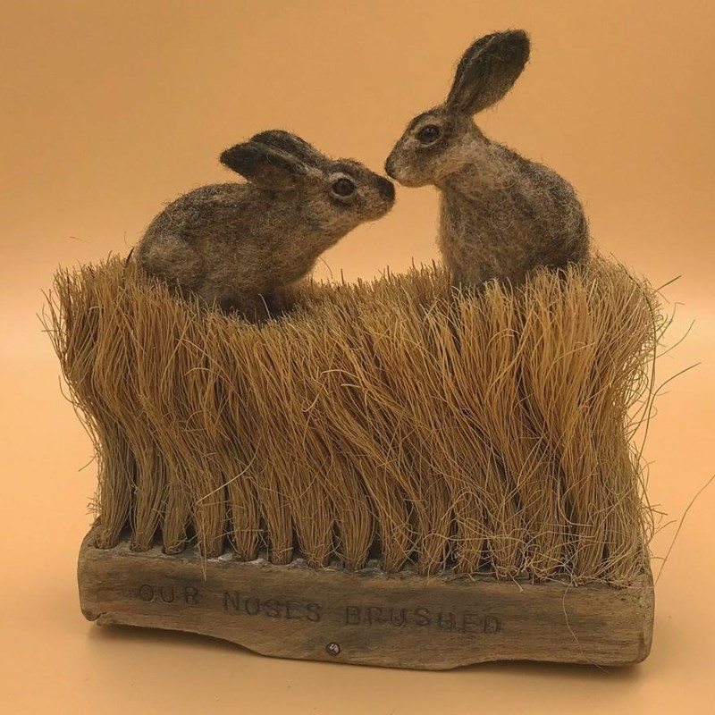 Mountain Cottontail - OUR NOSES BRUSEED