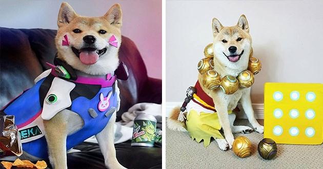 overwatch shiba inu cosplay