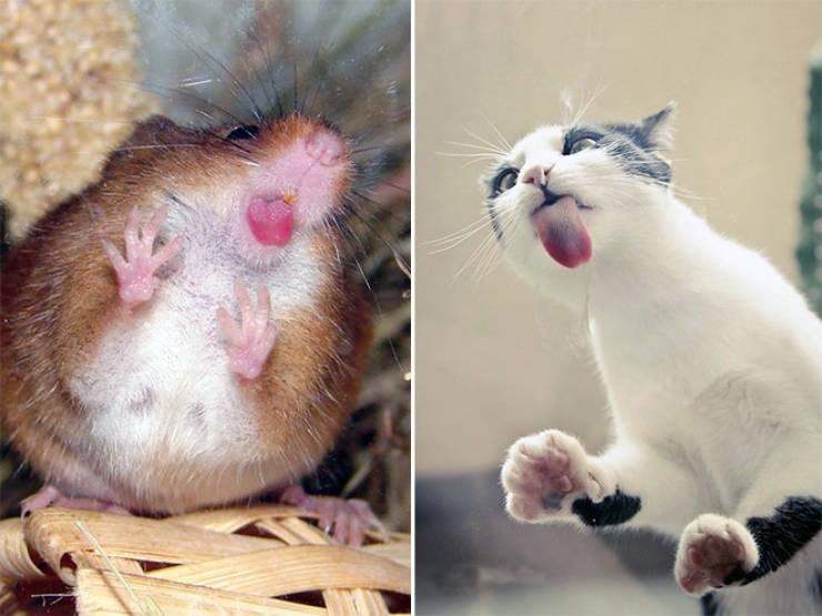 animals licking glass windows