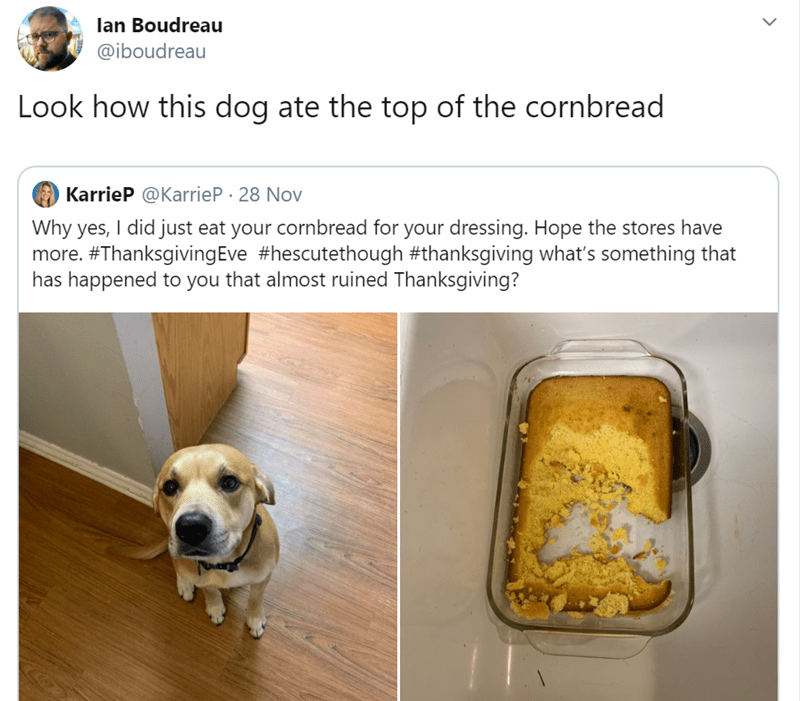 Canidae - lan Boudreau @iboudreau Look how this dog ate the top of the cornbread KarrieP @KarrieP 28 Nov Why yes, I did just eat your cornbread for your dressing. Hope the stores have more. #ThanksgivingEve #hescutethough #thanksgiving what's something that has happened to you that almost ruined Thanksgiving?