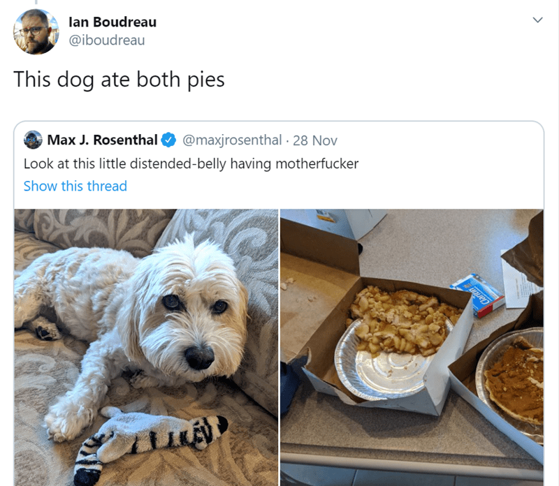 Canidae - lan Boudreau @iboudreau This dog ate both pies Max J. Rosenthal @maxjrosenthal 28 Nov Look at this little distended-belly having motherfucker Show this thread Clarton
