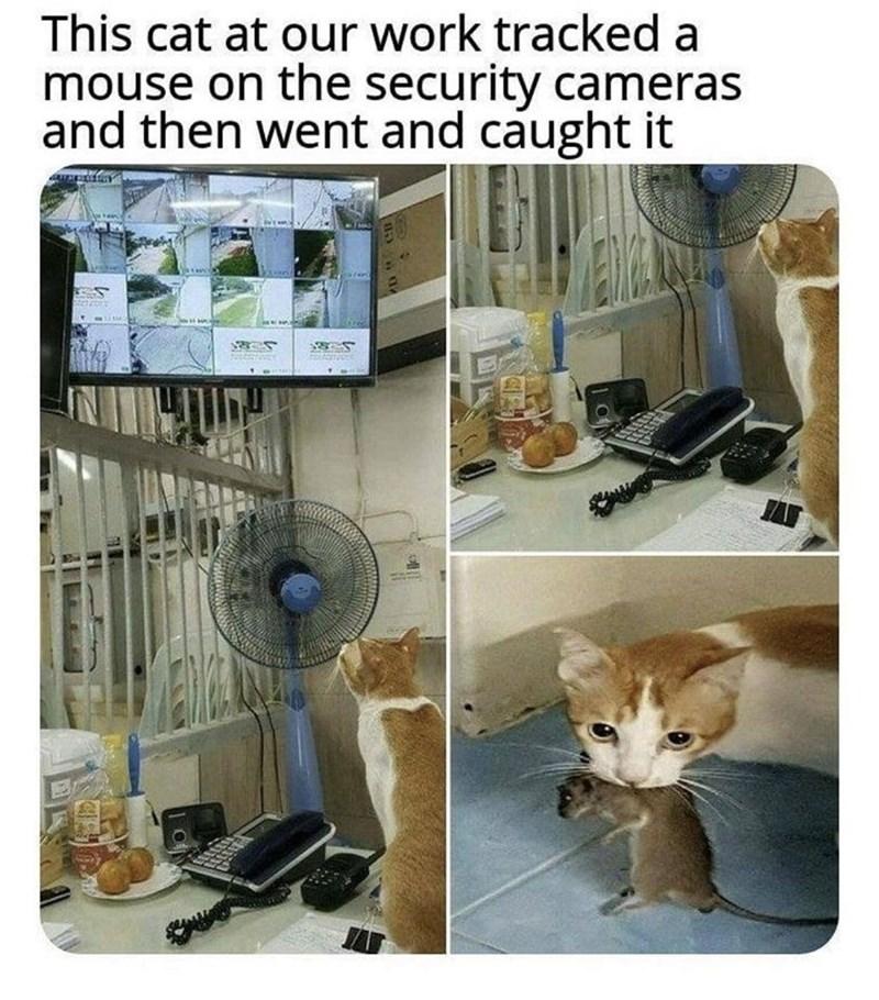 cat memes - 9396807168
