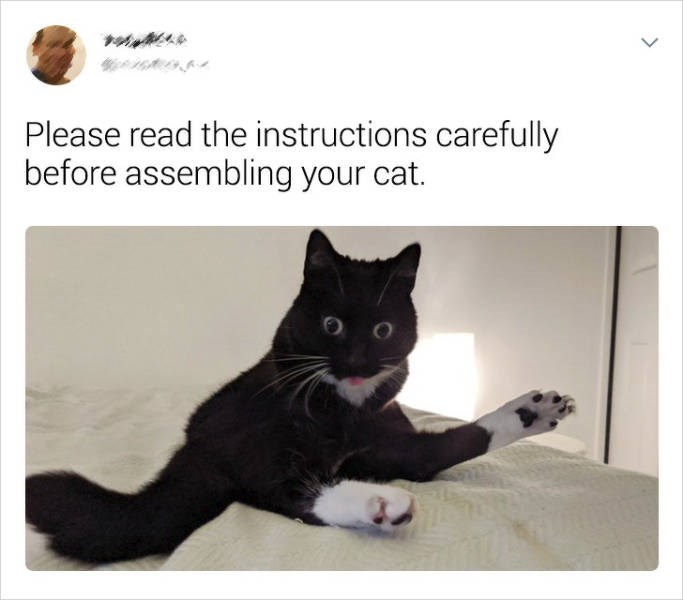 Cat - Please read the instructions carefully before assembling your cat.