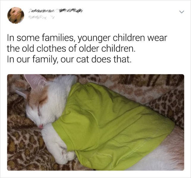 Cat - In some families, younger children wear the old clothes of older children In our family, our cat does that.