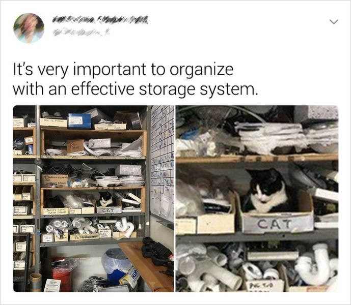 Product - It's very important to organize with an effective storage system. n ear CAT sre CAT >