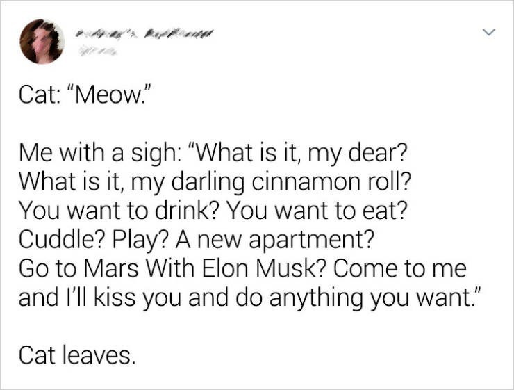 """Text - Cat: """"Meow."""" Me with a sigh: """"What is it, my dear? What is it, my darling cinnamon roll? You want to drink? You want to eat? Cuddle? Play? A new apartment? Go to Mars With Elon Musk? Come to me and I'll kiss you and do anything you want."""" Cat leaves."""